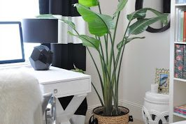 Creative Workspace : Green in the room